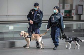 Собак научат определять зараженных коронавирусом